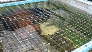 Tilapia Vita Farms hatchery part 1