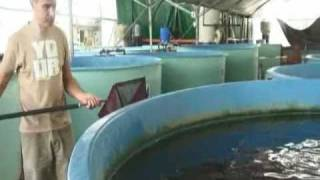 getlinkyoutube.com-Grow Fish Anywhere saves the fish population