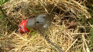 getlinkyoutube.com-เทคนิคเกษตรดอทคอม เทคนิคการทำน้ำหยดโดยใช้ขวดน้ำดื่มที่ทิ้งแล้ว