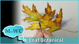 getlinkyoutube.com-Realistic Leaf Painting in Watercolor – Botanical Illustration