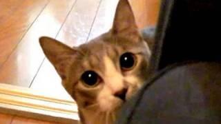 猫のだるまさんが転んだ。どうやって覚えたんだろう?