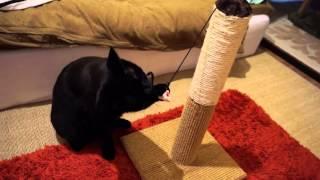 getlinkyoutube.com-一番売れている定番爪とぎタワーを試してみた!猫の家具や壁でのツメとぎ防止!