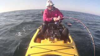 getlinkyoutube.com-Pesca de Corvina en kayak. 28,6 kgs
