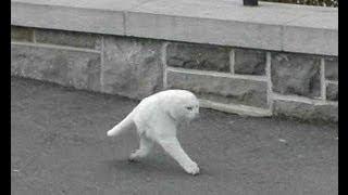 getlinkyoutube.com-Las 50 Imágenes más Raras y Curiosas de Google Street View