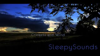 getlinkyoutube.com-Crickets and Wind – 9 hours of relaxing sounds to help you fall asleep - White noise