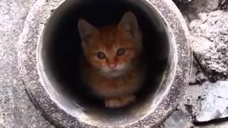 getlinkyoutube.com-土管の中の子猫ちゃん