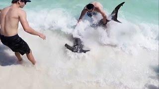 getlinkyoutube.com-10 Ft. Hammerhead Shark Pulled to Beach by Brave Teen
