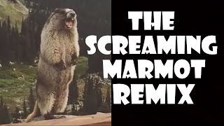getlinkyoutube.com-The Screaming Marmot - Remix Compilation