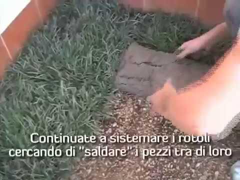Come impiantare un prato erboso a rotoli fai da te mania for Prato erboso a rotoli
