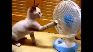 getlinkyoutube.com-مقاطع مضحكة للقطط