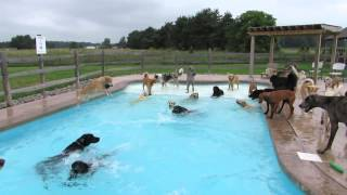 Dogs Having A Pool Party