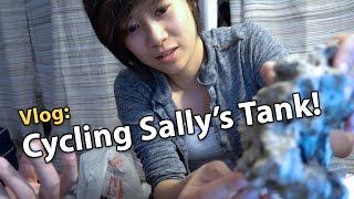 getlinkyoutube.com-Vlog: Setting up & Cycling Sally's 8g Reef Tank (11/24/2016)