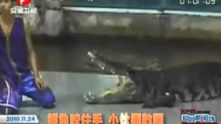getlinkyoutube.com-2010 11 24 鳄鱼咬住手 小伙翻数圈