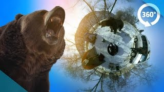 Survive a Bear Attack in VR! ( 360 3D Video )