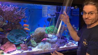 getlinkyoutube.com-ClownTube Slide - Adding clownfish to an anemone with a big clear pipe