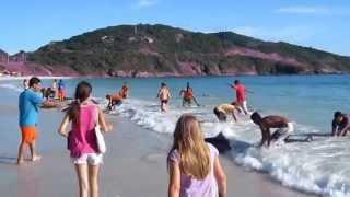 Delfini arenati aiutati dai turisti HQ