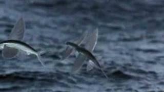 getlinkyoutube.com-Life - Flying Fish