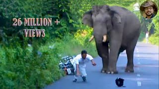 getlinkyoutube.com-Elephant Chasing Due To Foolish Activity.