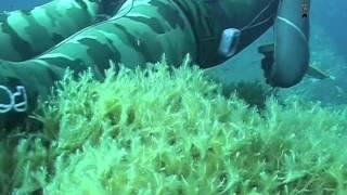 getlinkyoutube.com-[Documentario] -tecniche di  Pesca Sub - Nei primi Quindici Metri sardegna 2011