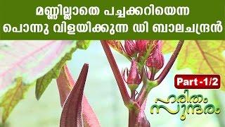 getlinkyoutube.com-D Balachandran's Earthless Vegetable Cultivation | HARITHAM SUNDHARAM 08-04-2016 PART 01