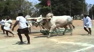 getlinkyoutube.com-2014 Mahanandi Bulls Show, 1st prize (Rs.30,000/-) winner, Palapallu Category, Late Dr.K.N.Rao