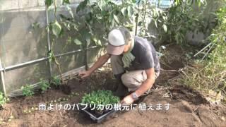 getlinkyoutube.com-菜園だより161024エンドウ・ソラマメ定植