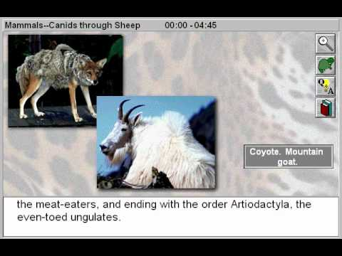 Biology: Mammals: Canids to Sheep Part 1