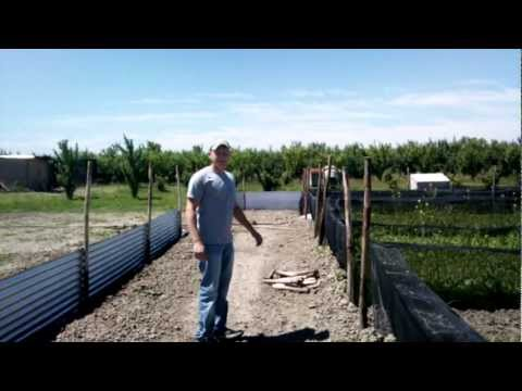 MrSisco70 allevamento di lumache 05-2010 Parte 2