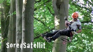 Tree Climbing up-and-down - Tree climb - Træklatring