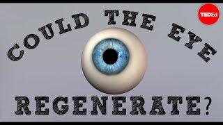 getlinkyoutube.com-Could a blind eye regenerate? - David Davila