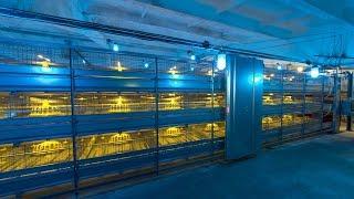 """getlinkyoutube.com-Broiler Cage """"Robot""""; Broiler Cage System; Broiler Colony System; Broiler Poultry equipment"""