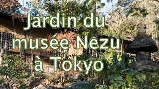 #175 Jardin du musée Nezu à Tokyo