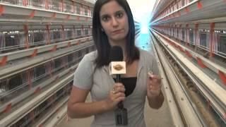 getlinkyoutube.com-Ovos de codorna com ômega 3 - Perdões-MG