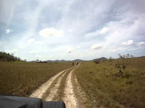 Cavalos Selvagens em Roraima