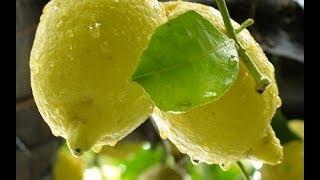 La ricetta della granita al limone