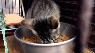 getlinkyoutube.com-いそ~ろ~と保護猫の夕方