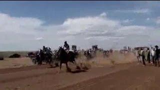 Illegal horse racing runs wild