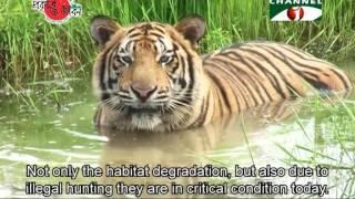 getlinkyoutube.com-Nature and Life - Episode 196 (Endangered Wildlife of Sundarbans)