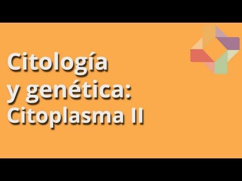 Citoplasma II - Citología y Genética - Educatina