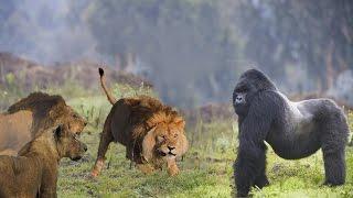 getlinkyoutube.com-Animals Behave Oddly ✰ Animal Get Crazy  ✰  HD