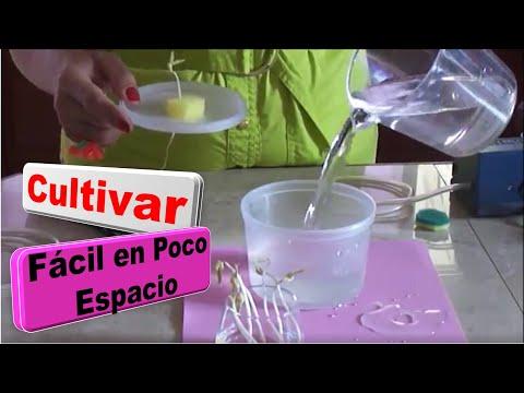 Como sembrar plantas sin tierra - Vida a lo Verde