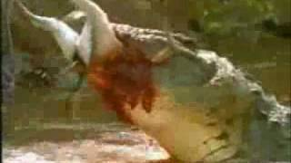 getlinkyoutube.com-Crocodile attacks
