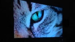 getlinkyoutube.com-Video Projector GM60 - HDMI, 30000Hrs, USB/SD Card