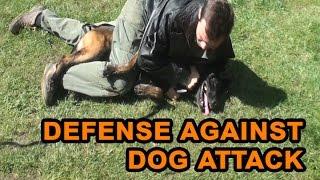 getlinkyoutube.com-How to defend against a dog. Self defense against dog attack