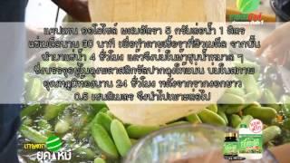 getlinkyoutube.com-เกษตรยุคใหม่ การปลูกแตงกวา