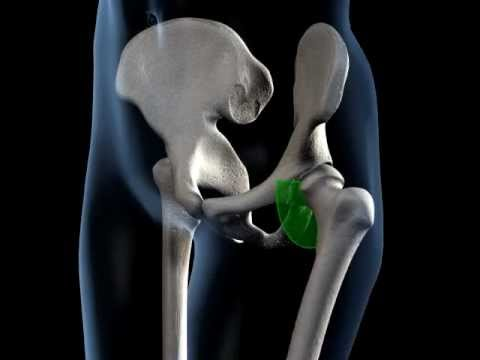 3D medical animation - hip joint range of movement