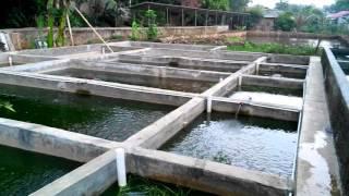 Cara Membuat Kolam Sirkulasi Budidaya Ikan