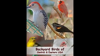 getlinkyoutube.com-Identify Your Common Backyard Birds