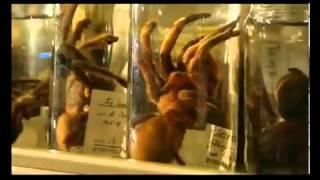 getlinkyoutube.com-Königin der Spinnen - Australiens Tarantula Teil 1