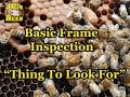 "Basic Frame Inspection ""Things To Look For"""